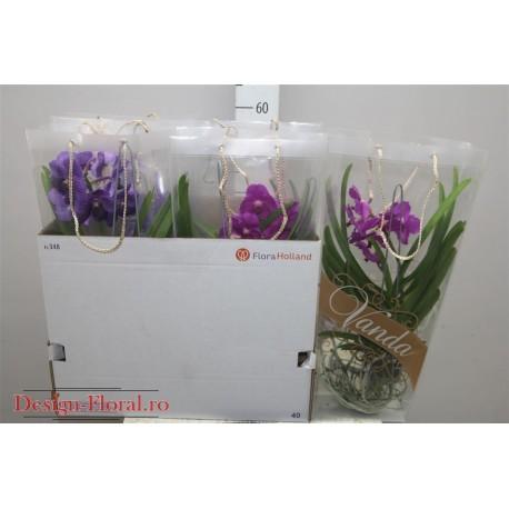 Orhidee Vanda mix