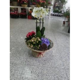 Aranjament floral cu plante decorative