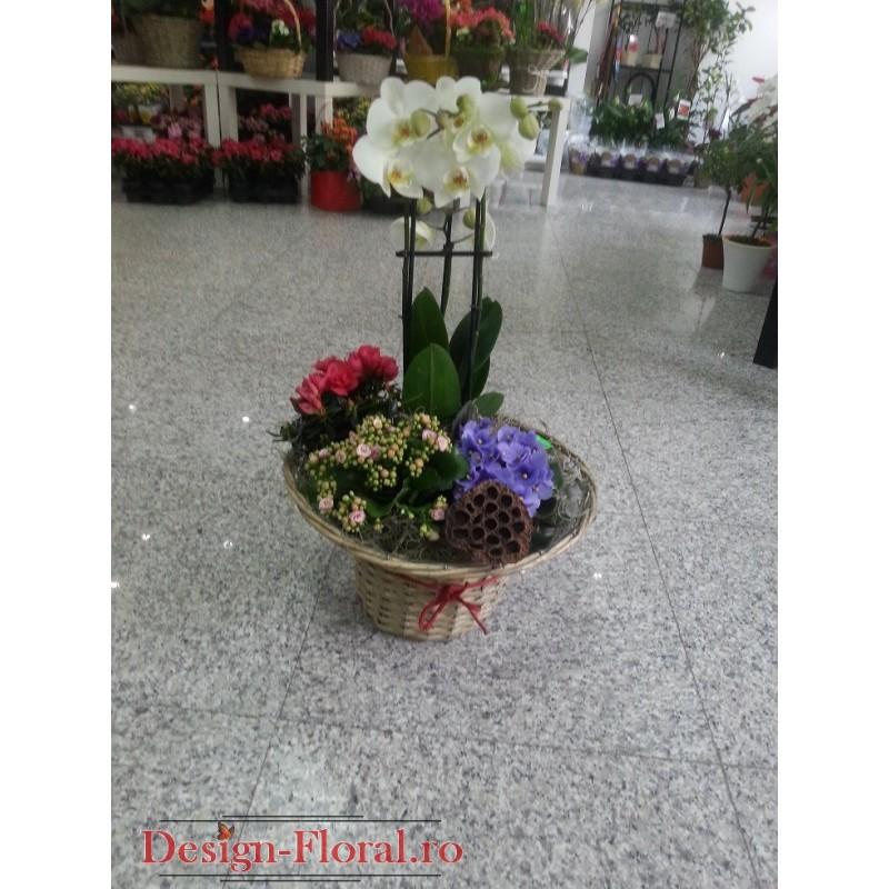 Aranjament floral cu plante decorative floraria design for Plante decorative