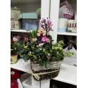 Cos cu plante decorative de apartament