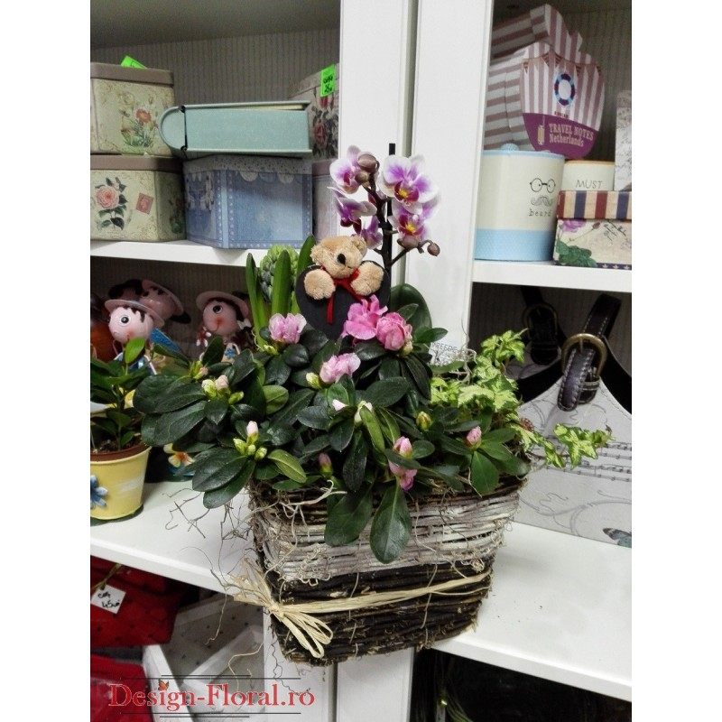 Cos cu plante decorative de apartament floraria design for Plante decorative