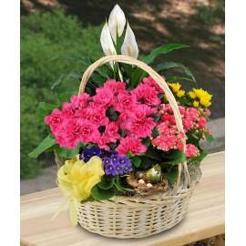 Cos cu plante cu Azalee, violete si Crinul pacii