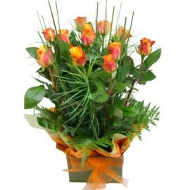 Cutie trandafiri portocalii