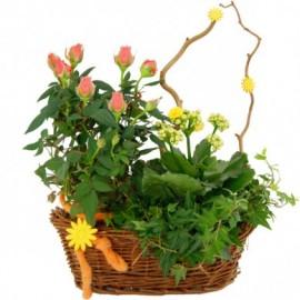 Cos plante - Rosa si Kalanchoe