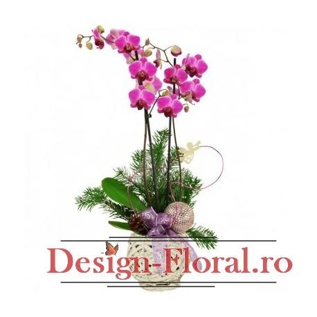 "Cos "" Winter Phalaenopsis lila"""