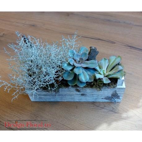 Aranjament plante suculente in ghiveci