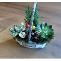 Aranjament cu plante in ghiveci pentru sezonul rece