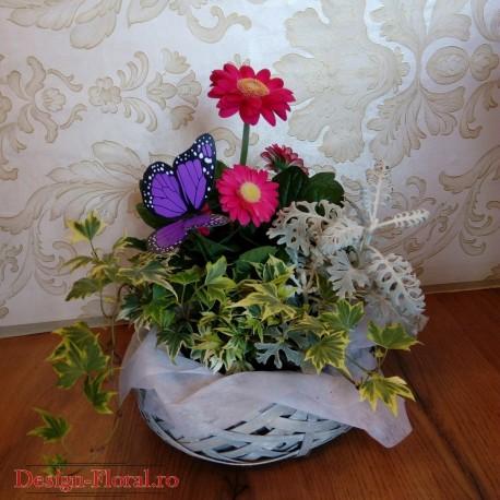 Cos cu plante decorative in ghiveci