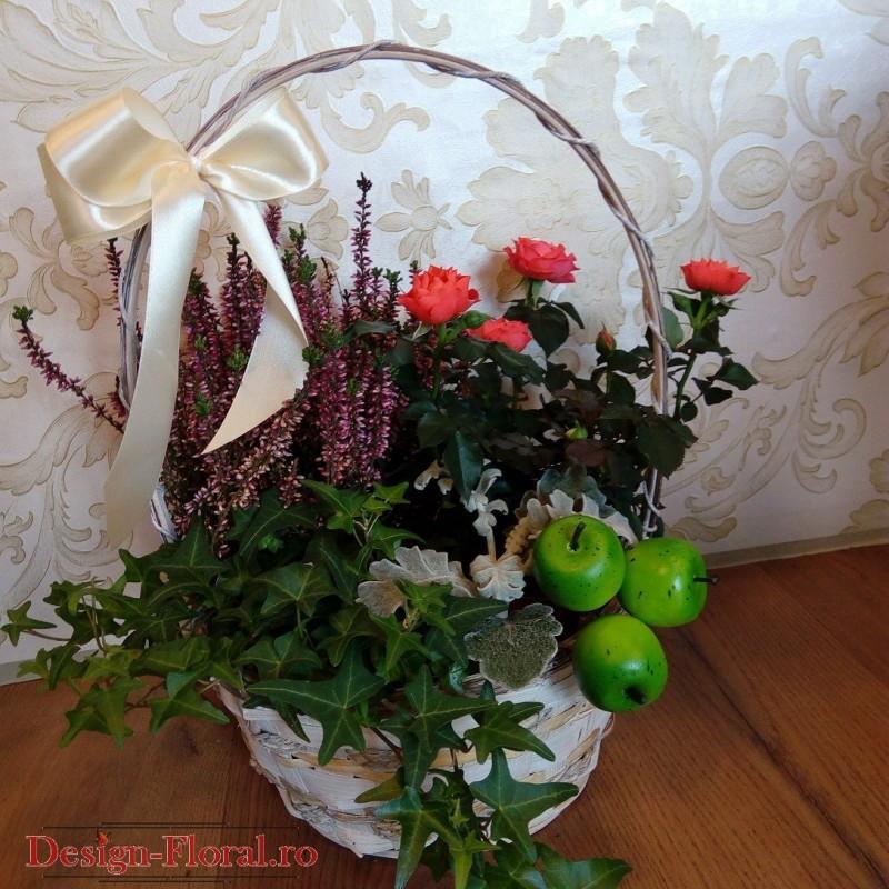 Aranjament floral cu plante decorative floraria design Plante decorative