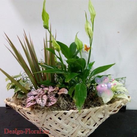 Cos floral cu plante de camera