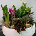 Aranjament cu plante in vas ceramic