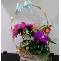Aranjament cu plante in cos decorativ