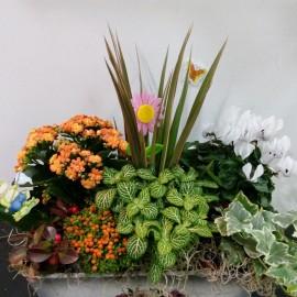 Aranjament floral cu plante in ghiveci