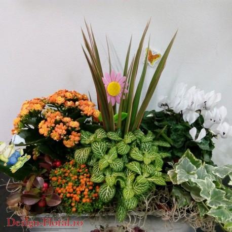 Aranjament Floral Cu Plante In Ghiveci Floraria Design Floral