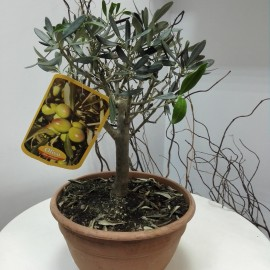 Bonsai Maslin L