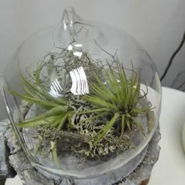 Terariu in glob de sticla cu plante aeriene