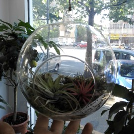 Terariu cu 3 plante aeriene