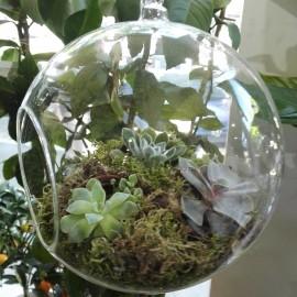 Terariu cu plante suculente