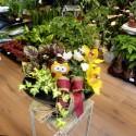Aranjament cu plante de apartament