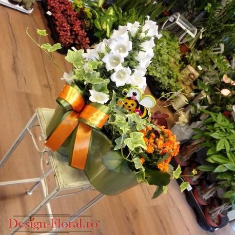 Aranjament duo cu plante in ghiveci