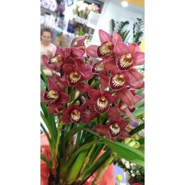 Orhidee Cymbidium mov