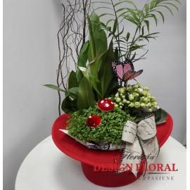 Joben cu plante in ghiveci