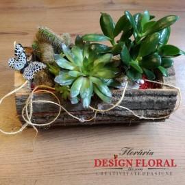 Aranjament natural cu plante suculente si cactusi
