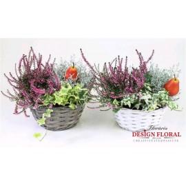 Aranjament cos cu plante in ghiveci