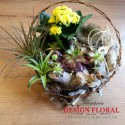 Aranjament plante suculente si tillandsia air plant