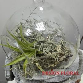 Terariu tillandsia in glob sticla