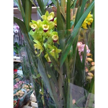 Orhidee Cymbidium verde