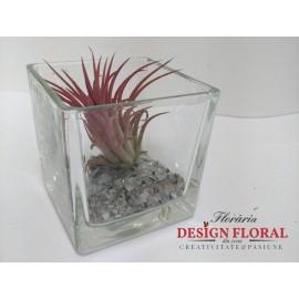 Cub de sticla cu o planta aeriana