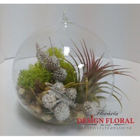 Terariu cu o planta aerofita