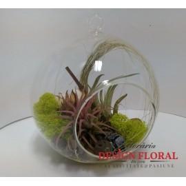 Terariu cu 2 plante aeriene