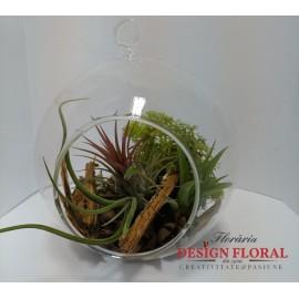 Terariu cu 3 plante aerofite