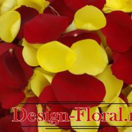Petale trandafiri bicolore
