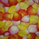 Petale mix de culori