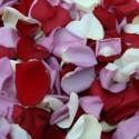 Mix petale de trandafiri