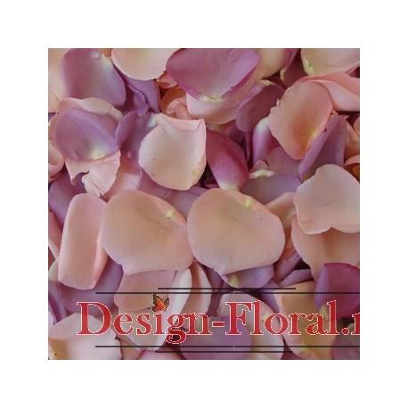 Petale trandafiri mov si roz