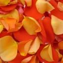 Petale portocalii mix