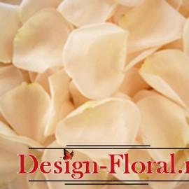 Petale trandafiri cream