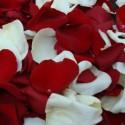 Petale trandafir rosu si alb