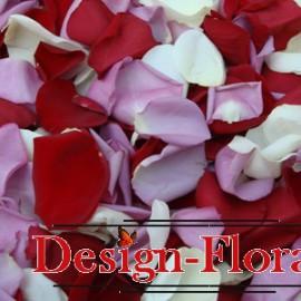 Petale mix rosu, lila, alb
