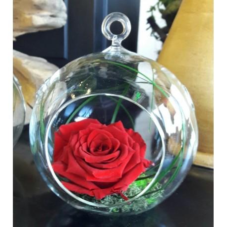Terariu cu trandafir rosu criogenat