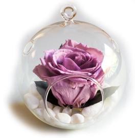 Terariu cu trandafir lila criogenat