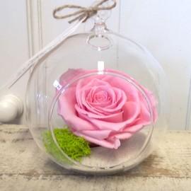 Terariu cu trandafir roz criogenat