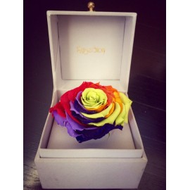 Rainbow special gift