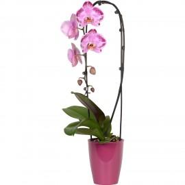 Suport arcada pentru tija florala