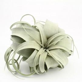 Planta aeriana Tillandsia Xerographica