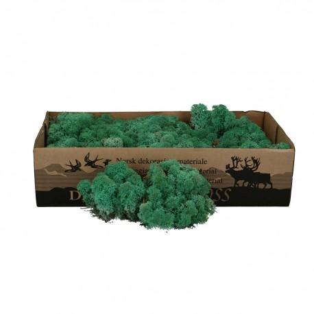 Licheni conservati pentru terarii
